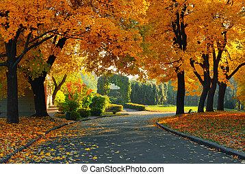 grüner park, gelber , bäume