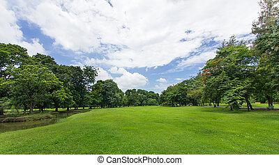 grüner rasen, und, bäume, mit, blauer himmel, an, der,...