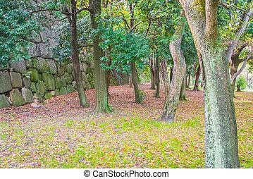 grüner wald, bäume, .