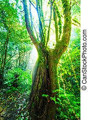 grüner wald, sunlight., natur, groß, bäume