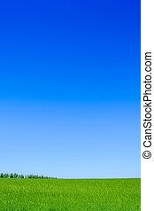 grüner weizen, feld, blau, sky., landschaftsbild, hintergrund