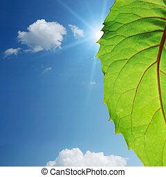 grünes blatt, auf, blauer himmel