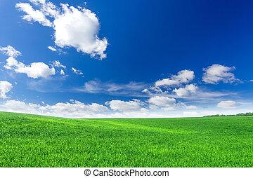 grünes feld