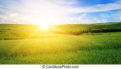 grünes feld, blau, himmelsgewölbe, mit, licht, clouds., oben, der, horizont, gleichfalls, a, hell, sunrise., breit, foto, .