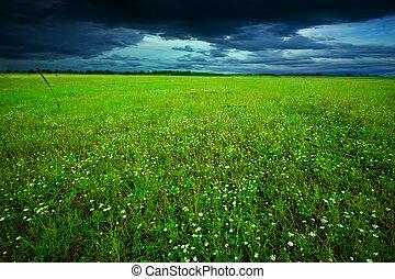 grünes feld, in, sommer