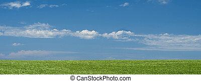 grünes feld, landschaftsbild, hintergrund, mit, blauer himmel