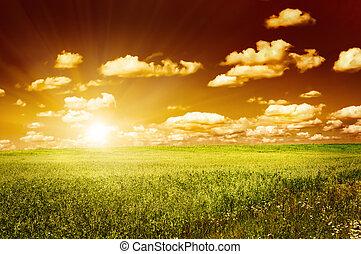 grünes feld, mit, blühen, blumen, und, roter himmel