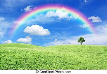 grünes feld, mit, einsamer baum, und, regenbogen