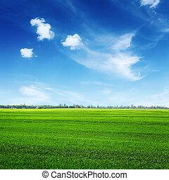 grünes feld, und, wolkenhimmel, auf, blauer himmel