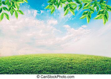 grünes feld, unter, blauer himmel, mit, weiße wolken, und, blätter, umwelt, concept.