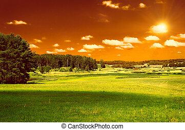 grünes feld, wald, und, roter himmel