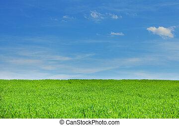 grünes gras, blau, himmelsgewölbe