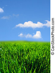 grünes gras, landschaftsbild
