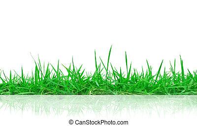 grünes gras, mit, reflexion, freigestellt, weiß, hintergrund