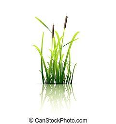 grünes gras, schilfgras
