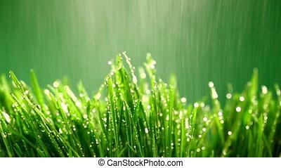 grünes gras, unter, der, regen