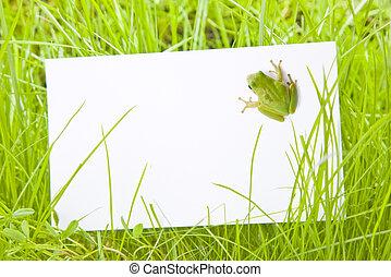 grünfrosch, zeichen, unter, weißes, gras