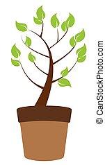 grünpflanze, baum