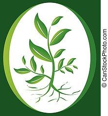 grünpflanze, hintergrund