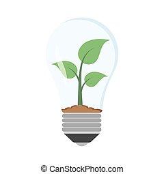 grünpflanze, in, zwiebel