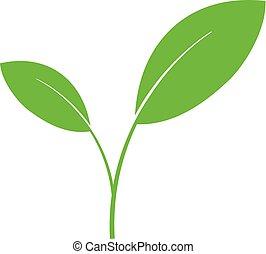 grünpflanze, schuss