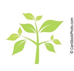 grünpflanze, vektor, abbildung