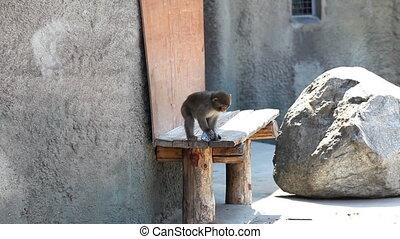 gra, małpa, butelka, dziecko