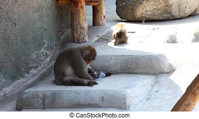 gra, małpa, butelka, plastyk