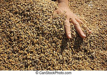 graan, achtergrond