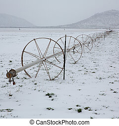 graan, velden, met, irrigatie, wielen, met, sneeuw, in,...