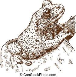grabado, árbol, ilustración, rana, casque-headed, black-...