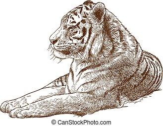 grabado, amur, siberiano, ilustración, tigre, dibujo