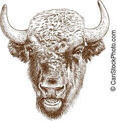 grabado, antigüedad, cabeza, bisonte, ilustración