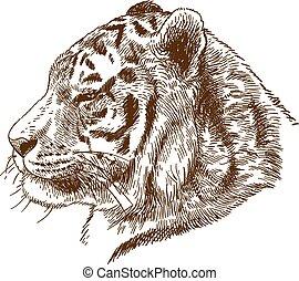 grabado, cabeza, amur, siberiano, ilustración, dibujo, tigre...