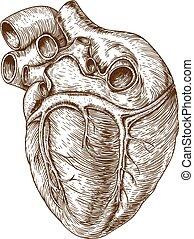 grabado, corazón, blanco, plano de fondo