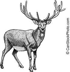 grabado, de, reno, blanco, espalda