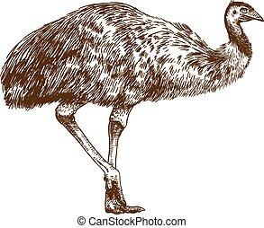 grabado, emu, dibujo, ilustración, avestruz
