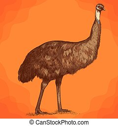 grabado, emu, ilustración, avestruz