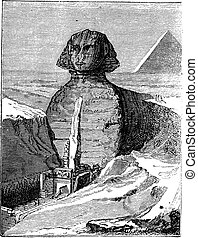 grabado, gran esfinge, egipto, vendimia, giza