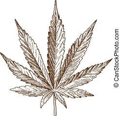 grabado, hoja cannabis, dibujo, ilustración