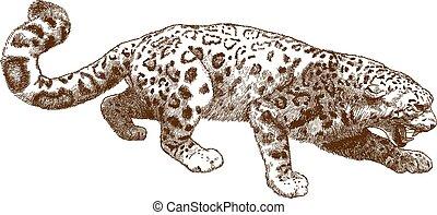 grabado, leopardo, nieve, ilustración