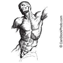 grabado, macho, torso