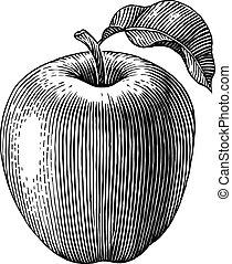 grabado, manzana