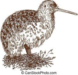 grabado, pájaro kiwi, ilustración, dibujo