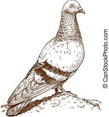 grabado, paloma, ilustración