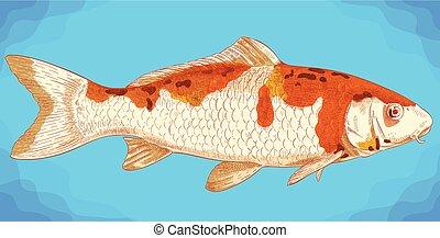 grabado, pez koi, ilustración
