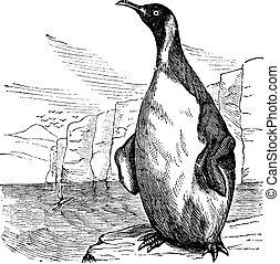grabado, rey, vendimia, aptenodytes patagonicus, o, pingüino