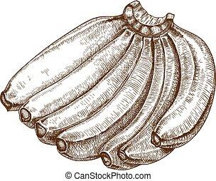 grabado, vector, plátanos