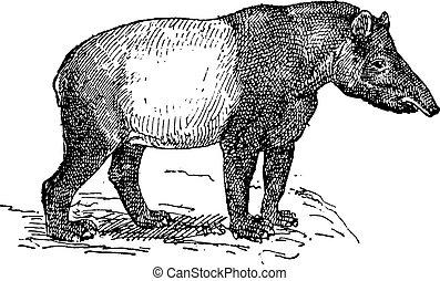 Grabado, vendimia,  tapir