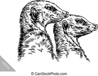 grabar, empate, meerkat, tinta, ilustración